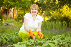 Happy woman working in  vegetable garden Royalty Free Stock Photos