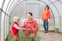 Happy women with child works at hothouse Royalty Free Stock Photos