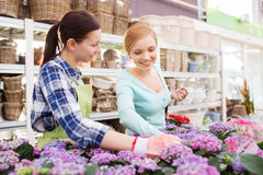 Happy women choosing flowers in greenhouse Stock Photos