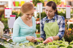 Happy women choosing flowers in greenhouse Stock Image