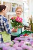 Happy women choosing flowers in greenhouse Royalty Free Stock Photo