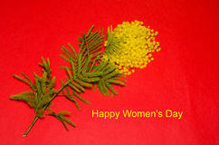 Happy Women S Day Card With A Bunch Of Mimosa Stock Photo