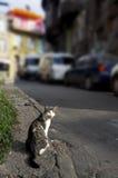 Happy yawning cat in sunny street Stock Image