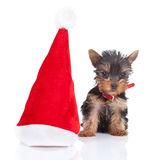 Happy yorkie toy Royalty Free Stock Image