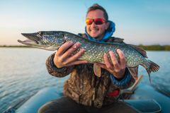 Happy young angler holds the pike fish royalty free stock image