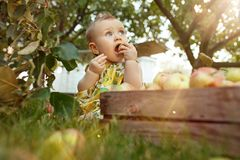 The happy young baby girl during picking apples in a garden outdoors Royalty Free Stock Photos