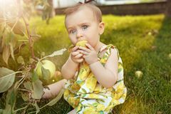 The happy young baby girl during picking apples in a garden outdoors Stock Photo
