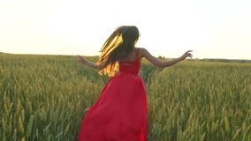 Happy young beautiful woman in red dress arms raised running on wheat field in sunset summer, Freedom health happiness. Happy young beautiful woman in red dress stock video