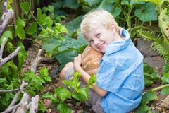 Happy young boy holding a home grown organic pumpkin. Handsome happy young boy holding a home-grown organic pumpkin from his garden Stock Image