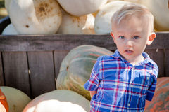 Happy Young Boy at the Pumpkin Patch Royalty Free Stock Photos