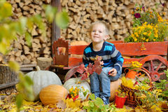 Happy young boy sitting with a pumpkins. Autumn. Happy young boy picking a pumpkin for Halloween. Little kid sitting on cart. Autumn harvest Royalty Free Stock Images