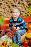Happy young boy sitting with a pumpkins. Autumn. Happy young boy picking a pumpkin for Halloween. Little kid sitting on cart. Autumn harvest Stock Photo