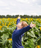 Happy young boy in sunflower field. With raised arms Royalty Free Stock Photos