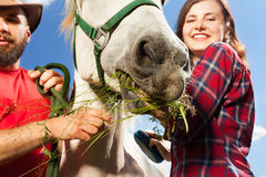 Happy young couple feeding their white horse Royalty Free Stock Photography