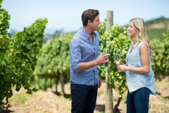 Happy young couple looking at each other while holding wineglasses. At vineyard Stock Photos