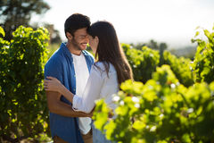 Happy young couple standing face to face at vineyard Stock Image