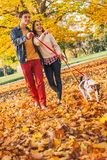 Happy young couple with two cute dogs walking in park Stock Images