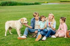 happy young family blowing soap bubbles while resting with dog stock photography