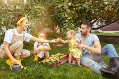 The happy young family during picking apples in a garden outdoors. Love, family, lifestyle, harvest concept. Smiling men and women and two small sisters. Green stock photography
