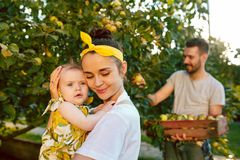 The happy young family during picking apples in a garden outdoors. Love, family, lifestyle, harvest concept. Smiling men and women and small baby. Green grass stock photo