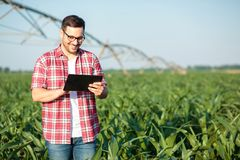 Happy young farmer or agronomist using a tablet in corn field. Irrigation system in the background royalty free stock photos