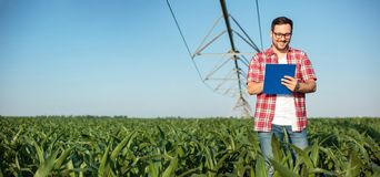 Happy young farmer or agronomist writing on a clipboard, inspecting a corn field. Wide ratio panoramic photo. Happy young farmer or agronomist in red checkered royalty free stock photos