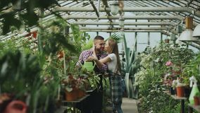 Happy young florist couple in apron working in greenhouse. Cheerful woman embrace and kiss his husband watering flowers Royalty Free Stock Photography