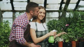 Happy young florist family in apron working in greenhouse. Attractive man embrace and kiss his wife while she watering royalty free stock photography