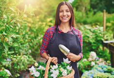 Happy young florist working in a greenhouse. At a nursery collecting fresh white flowers in a wicker basket for sale in her shop Royalty Free Stock Photography