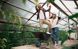 Young farmers at work in greenhouse stock images