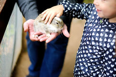 Happy young girl with father petting baby rabbit. At farm Stock Photos
