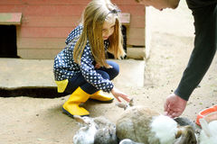 Happy young girl with father petting baby rabbit. At farm Royalty Free Stock Photos