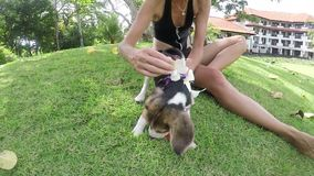 Happy young girl with her beagle dog with plumeria in summer park. Slow motion. Outdoors portrait. Slow motion. Tropical stock footage