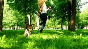 Happy young girl jogging with her beagle dog. Slow. Happy young girl with long hair playing with jogging with her beagle dog in summer park. Slow motion stock video footage