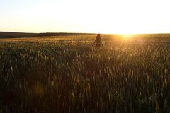 Happy young girl with long beautiful hair standing in a wheat field in bright sunlight royalty free stock photography