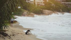 Happy young man playing with dog and stick on tropical beach in slow motion. 1920x1080. Happy young man playing with dog and stick on tropical beach. 1920x1080 stock footage