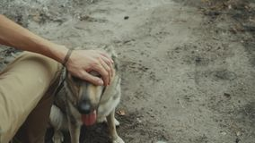 Happy young man stroking his loving dog in the forest.slow motion.