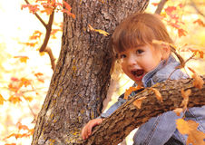 Happy Young Toddler Girl in Autumn Playing. A happy surprised young toddler girl playing in a tree with autumn leaves Royalty Free Stock Image