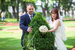 Happy young wedding couple embracing green bush Stock Photo