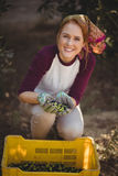 Happy young woman collecting olives in crate at farm Royalty Free Stock Photo