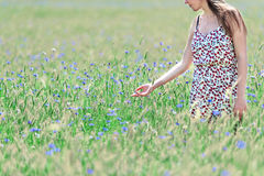 Happy young woman in corn field with cornflowers Stock Photos