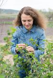 Happy young  woman gardening Royalty Free Stock Photography