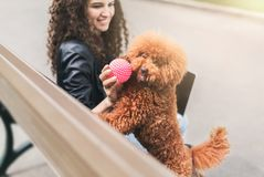 Happy young woman and little dog playing outdoors. Happy girl playing with curly puppy outdoors. Woman giving ruber ball to playful apricot toy poodle stock image