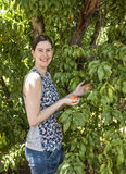 Happy Young Woman Picking Fresh Peaches. Stock Photos