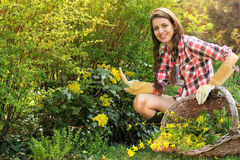Happy young woman picking yellow flowers Royalty Free Stock Photography