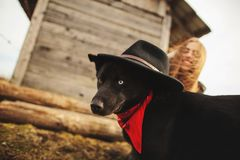 Happy young woman plaing with her black dog in fron of old wooden house. Girl tries a hat to her dog royalty free stock images