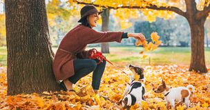Happy woman playing with dogs outdoors in autumn Royalty Free Stock Image