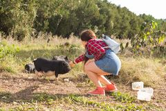 Happy young woman plays with little wild boars on nature. Happy young woman plays with little wild boars on nature stock photos