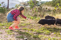 Happy young woman plays with little wild boars on nature. Happy young woman plays with little wild boars on nature stock photography