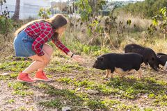 Happy young woman plays with little wild boars on nature. royalty free stock images